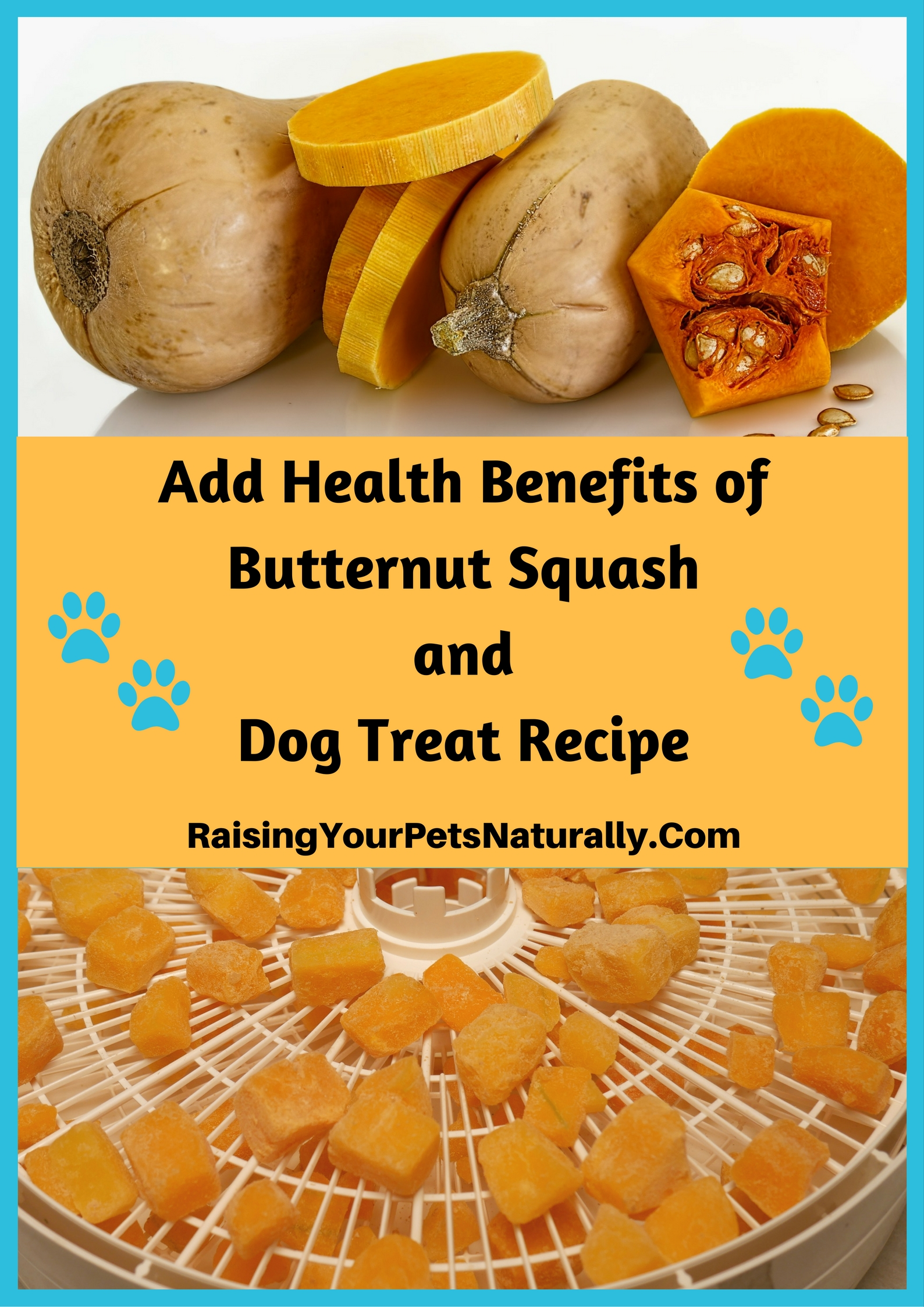 Learn the health benefits of butternut squash for dogs, cats and people. A healthy dog treat recipe is in the article as a bonus! Visit www.raisingyourpetsnaturally.com and search squash.