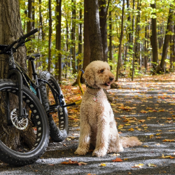 1-Running-Dog Bike Tow Leash®