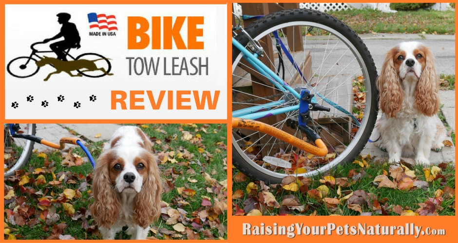 I am really impressed with the Bike Tow Leash and the ease of use and quality. It is definitely a product I can recommend to dog training clients and friends, especially for active dogs and active families. Dexter and I will continue to use the Bike Tow Leash, but because of Dexter's limitations, we will be keeping a slow pace and short rides. He did enjoy it, so it will come out again this spring.