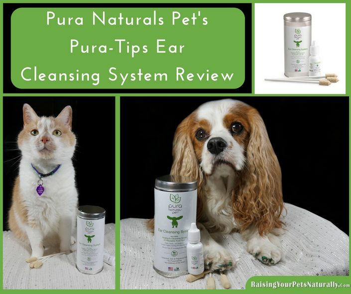 How to clean a cat's ears with the best natural ear cleaner for cats. Dirty dog ears? Check out this great natural ear cleaner for dogs. Eco-friendly, organic and non-toxic. Your pets will thank you for it.
