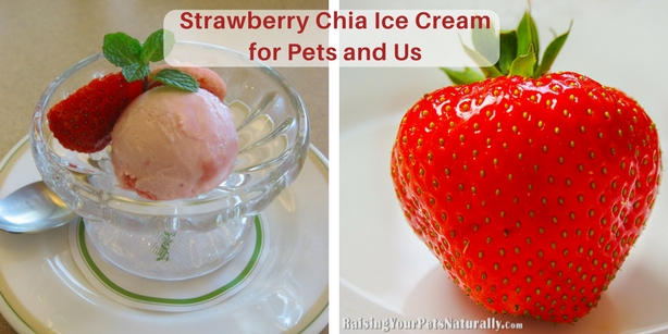 Today is Strawberry Ice Cream Day! There's no getting around it— traditional ice cream isn't the healthiest of foods. And for dogs and cats, dairy is pretty much a no-no, since a dog or cat's gut just doesn't tolerate lactose. It's not uncommon for pets to experience diarrhea, gas, or vomiting when eating dairy products. For that matter, people can also be lactose intolerant.