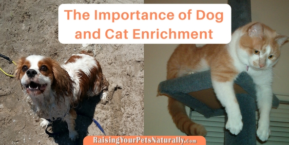 Pet enrichment is so important for a pet's well-being. Dogs and cats are very smart and engaged animals that need activity and mental stimulation in order to thrive. I'm a huge fan of feeding a dog out of a food toy, particularity if that dog is a puppy, adolescent, or active dog breed. These dogs need as much enrichment as possible just to keep them out of trouble. ;)