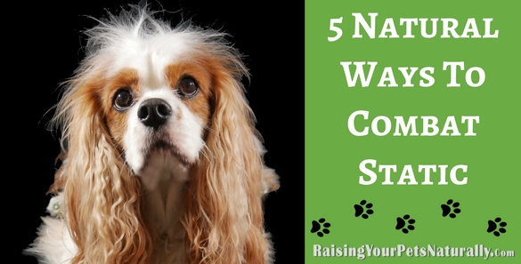 Here are five ways to naturally help combat static electricity in your home and with your pet. #raisingyourpetsnaturally