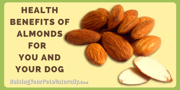 The Health Benefits of Almonds for You and Your Dog   Almonds For Dogs