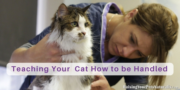 As early as possible, you should start to get your kitten or cat comfortable with being handled, restrained, and groomed. Learn how to teach your cat to enjoy being handled. #raisingyourpetsnaturally