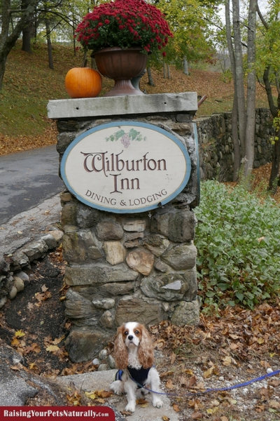 Dog-Friendly Vacations | Dog-Friendly Manchester, Vermont |Wilburton Inn