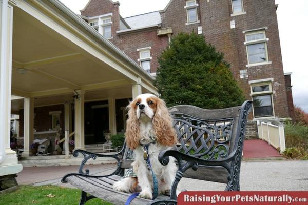 Dog-Friendly Manchester, Vermont |Wilburton Inn