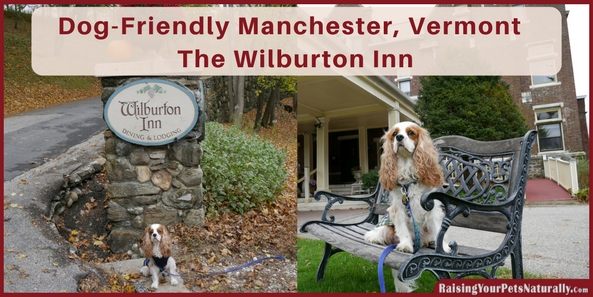 Dog-friendly vacations in Manchester, Vermont. Traveling with your dogs in Vermont is so much fun. Check out one of the best dog friendly vacations and dog friendly hotel in Vermont, The Wilburton Inn.