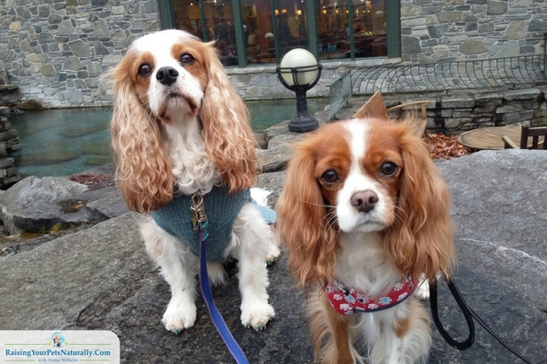 Pet friendly stores in Manchester, Vermont