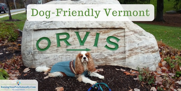Dog-Friendly Retail Stores in Manchester, Vermont | Dog-Friendly Orvis Retail Store. The Orvis flagship store. We enjoyed exploring the dog-friendly Orvis store. The employees were so nice and friendly. It seemed that Dexter The Dog and his friend Levi were a hit. Employees and guests came up to us to say hello.