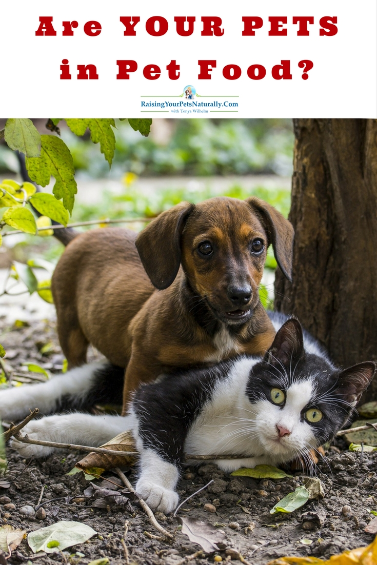 """Healthy and Not Healthy Pet Food Ingredients. Your dogs, cats, roadkill, and zoo animals are also included in rendering plants! Yes, you read that right. Have you ever seen either of these words in your pet's food or treats: """"meat,"""" """"animal,"""" """"animalby-product,"""" or """"meatby-product""""? You can be assured that this includes pets!"""