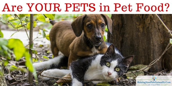 What's really inside your pet's food? It could be your pets!