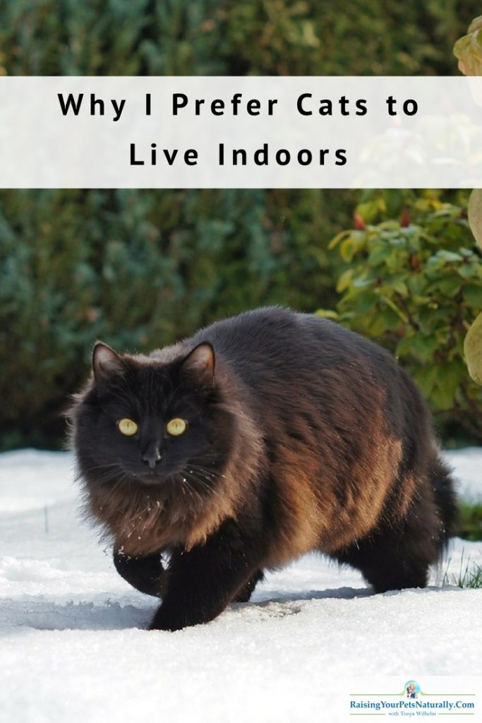 Why I Prefer Cats to Live Indoors. It's not just the safety of the pet cat; it's also the safety of other animals. Read more. #raisingyourpetsnaturally