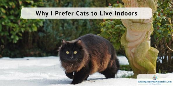 Indoor cats vs outdoor cats