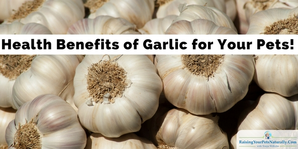Health Benefits of Garlic   Is Garlic Toxic to Dogs and Cats? Veterinary food therapists and pet herbalists likeDr. Martin Goldstein,Dr. Richard Pitcairn, andGregory Tilfordpromoting the use of garlic with our pets. But, like with anything, you need to use common sense and moderation when giving your dog, cat, or yourself garlic.