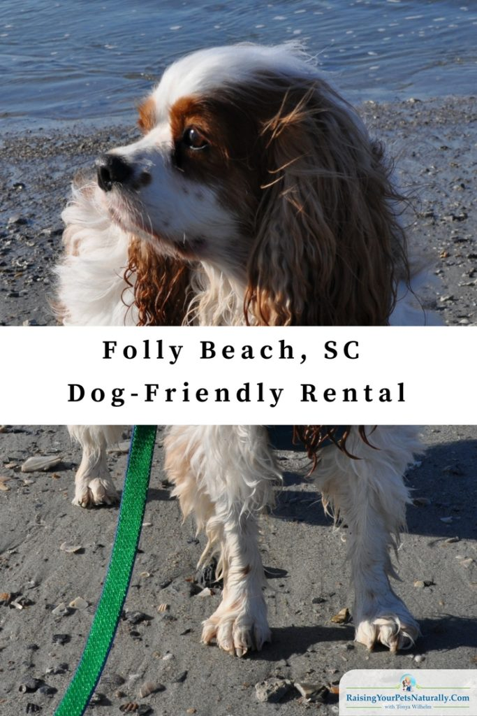 """Dog-friendly vacations: Folly Beach rentals that are pet friendly. The family decided to take our springdog-friendly vacationto South Carolina and stay in Folly Beach. We are most defiantly a beach family. We rented """"Close To The Edge,"""" a great 3-bedroom beach house rental through VRBO (Vacation Rentals By Owner, part of the HomeAway Family)."""