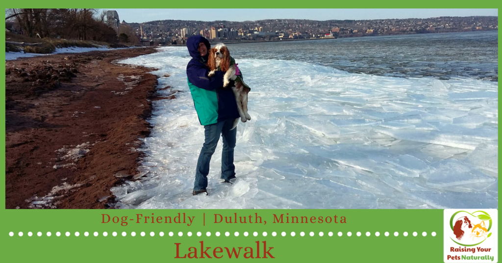 Dog-friendly vacations in Duluth, Minnesota. Traveling with dogs in Duluth can be a blast if you know where to go. Check out these dog-friendly Duluth attractions. #raisingyourpetsnaturally