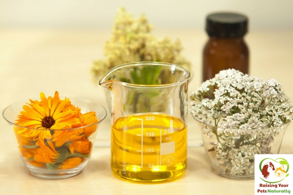 Common essential oils for dogs. Essential oils for dog allergies and itchy skin, ears and more. #raisingyourpetsnaturally