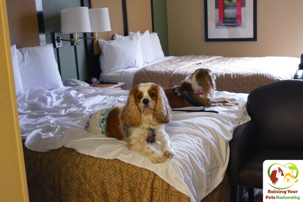 Dog-Friendly Extended Stay America, Vienna, VA