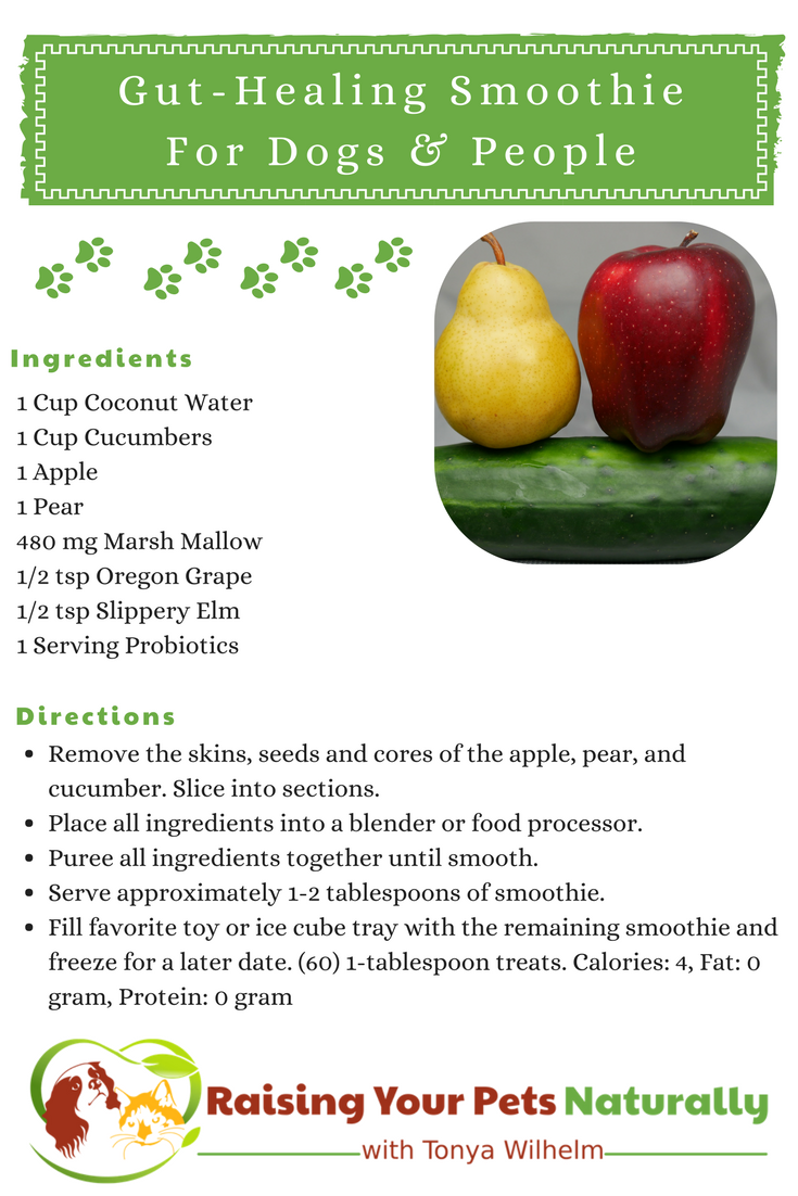 Healthy dog smoothies that you can share! Apple, cucumber, pear and gut healing herbs makes this smoothie a nice cooling choice for good gut health. #raisingyourpetsnaturally #smoothies #dogsmoothies