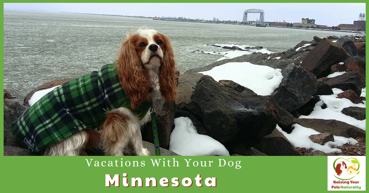 Dog-Friendly Vacations in Minnesota. If you are traveling with dogs, you won't want to miss these Dog-Friendly Minnesota attractions, hotels and destinations. #raisingyourpetsnaturally