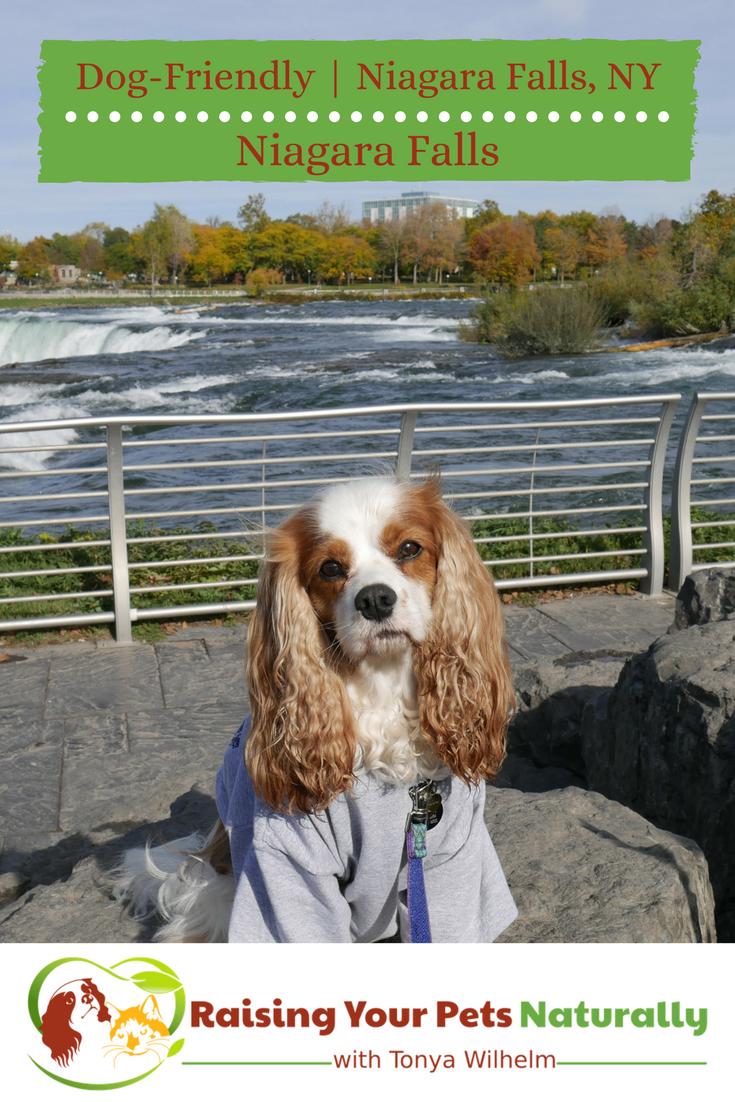 Dog-friendly vacations with your dog. Dog-friendly Niagara Falls, New York USA. Open 365 days, Niagara Falls is a great pet-friendly destination. #raisingyourpetsnaturally