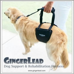 Products for senior dog care and mobility.