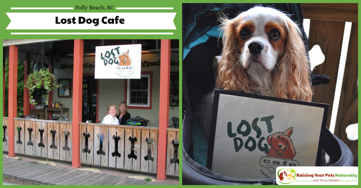 Dog-friendly vacations in Folly Beach, South Carolina. You won't want to miss the Lost Dog Cafe in Folly Beach, truly a dog-friendly restaurant. #raisingyourpetsnaturally