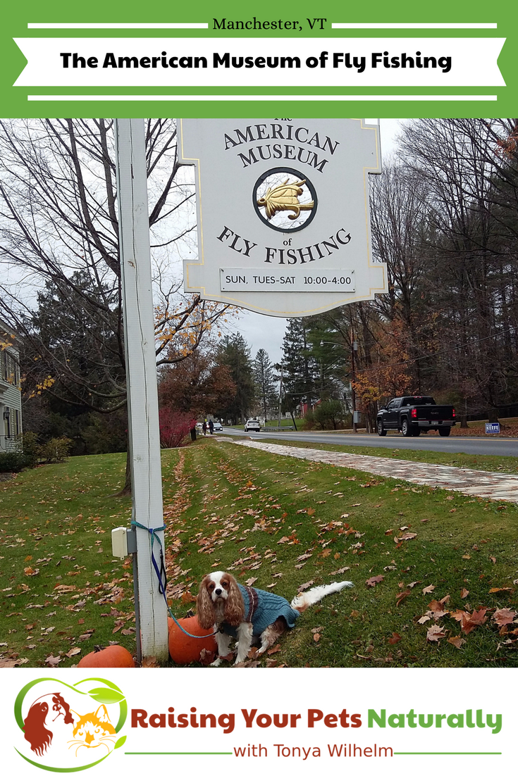 Dog-Friendly Vacations in Manchester, Vermont. Traveling with dogs is amazing, especially when you find dog-friendly attractions like the The American Museum of Fly Fishing. #raisingyourpetsnaturally