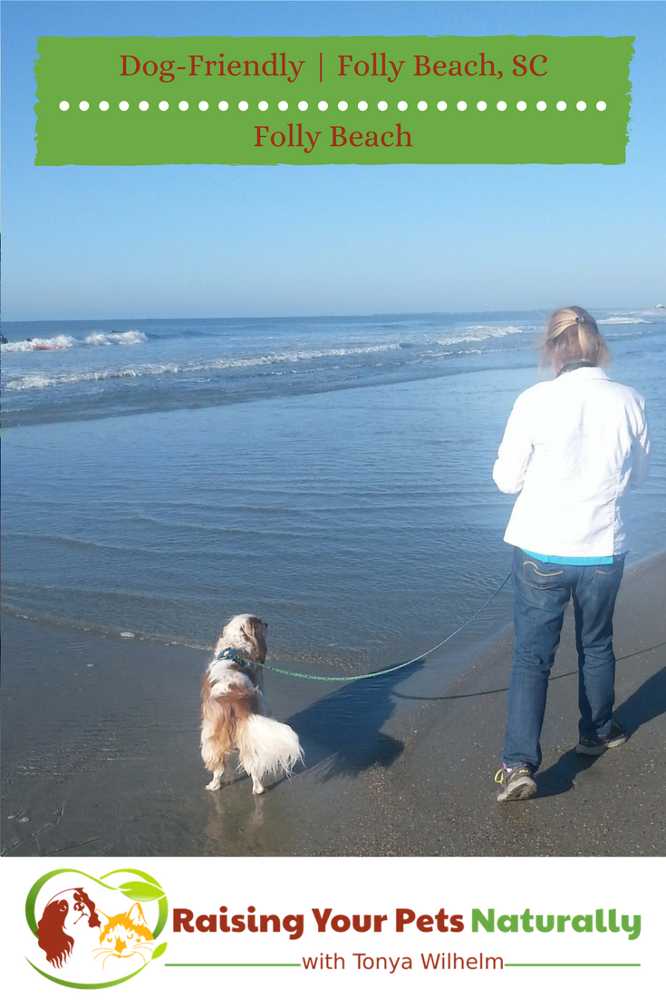 Dog-Friendly Folly Beach, South Carolina. If you are looking for a dog-friendly beach, you won't want to miss this one! #raisingyourpetsnaturally #dogfriendly #dogfriendlybeaches #dogfriendlyvacations #follybeach