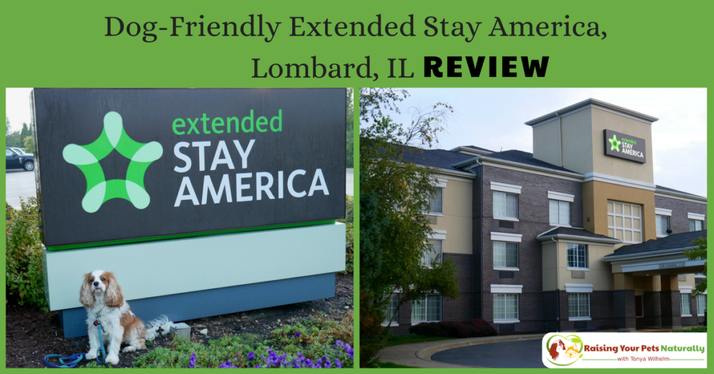 Pet-Friendly Hotels in the Chicago Metro area. Dog-Friendly Chicago hotels, The Extended Stay America review. #raisingyourpetsnaturally