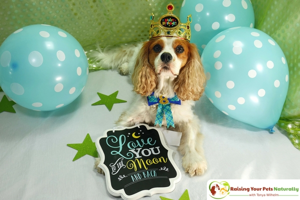 Dexter The Dog's 8th Birthday Celebration. Today is a day to remember to live and enjoy life to the fullest. Read Dexter's inspiring story. #raisingyourpetsnaturally