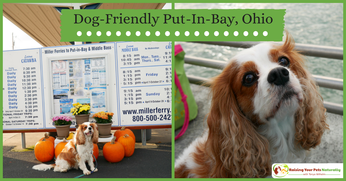 Dog-Friendly Put in Bay, Ohio. Things to do in Put-in-Bay with your dog. Dexter and I loved our dog-friendly day trip at Put-in-Bay. #raisingyourpetsnaturally