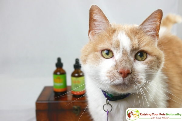 Natural Joint Supplements for Senior Cats. NHV Natural Pet Products Old Timer Joint Problem Kit Review. #raisingyourpetsnaturally