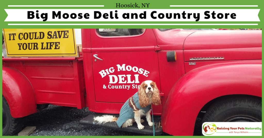 If you and your dog find yourself near Hoosick, New York and are looking for a fun, dog-friendly attraction, you should check out the Big Moose and Deli and Country store. See why. #raisingyourpetsnaturally
