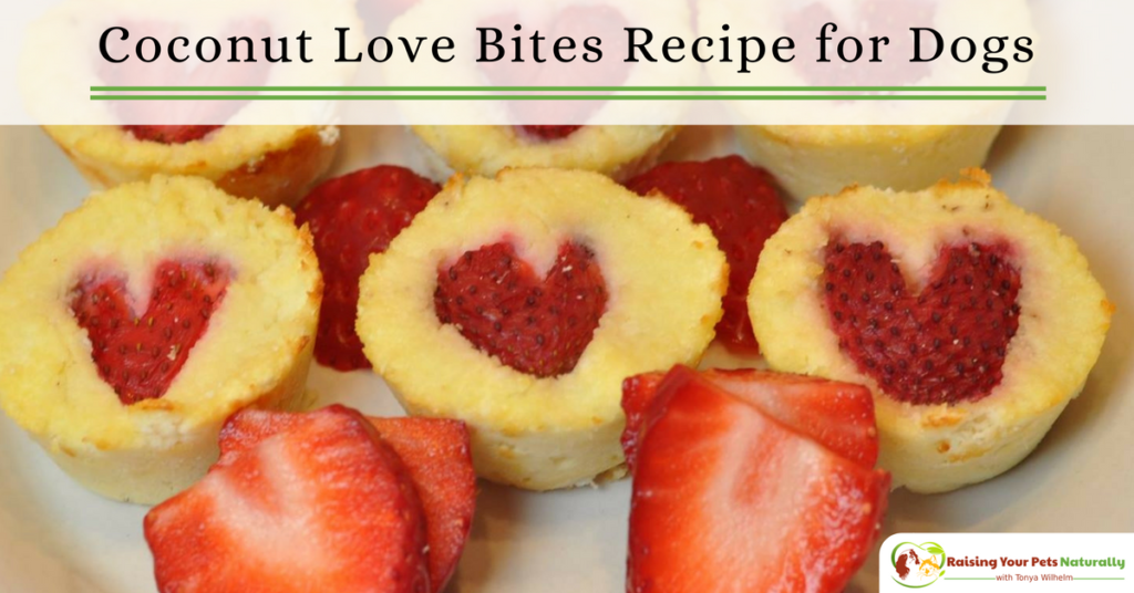 Healthy Valentine Dog Treat Recipes. Organic coconut bite muffins your dog will love. This homemade dog treat recipe will have your dog begging for more. #raisingyourpetsnaturally
