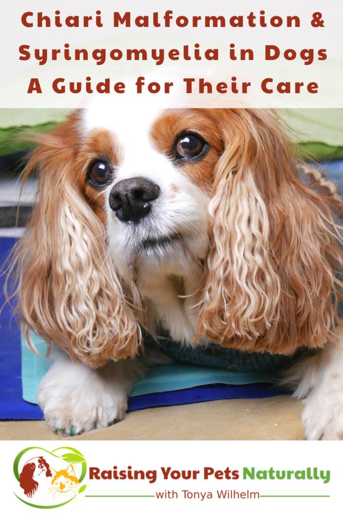 Chiari Malformation and Syringomyelia in Dogs. A Guide for Their Care and Treatment. #raisingyourpetsnaturally #cm #sm #cavaliers #ckcs #chiarimalformation #syringomyelia