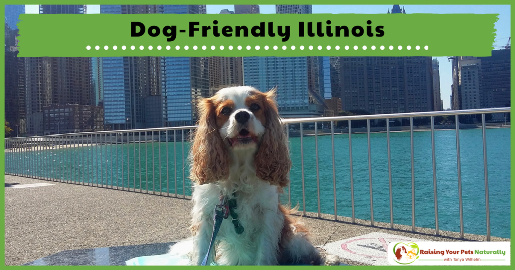 Dog-Friendly Vacations in The Midwest-Dog-Friendly Illinois. If you are traveling with dogs, you won't want to miss these Dog-Friendly Illinois attractions, hotels and destinations. #raisingyourpetsnaturally
