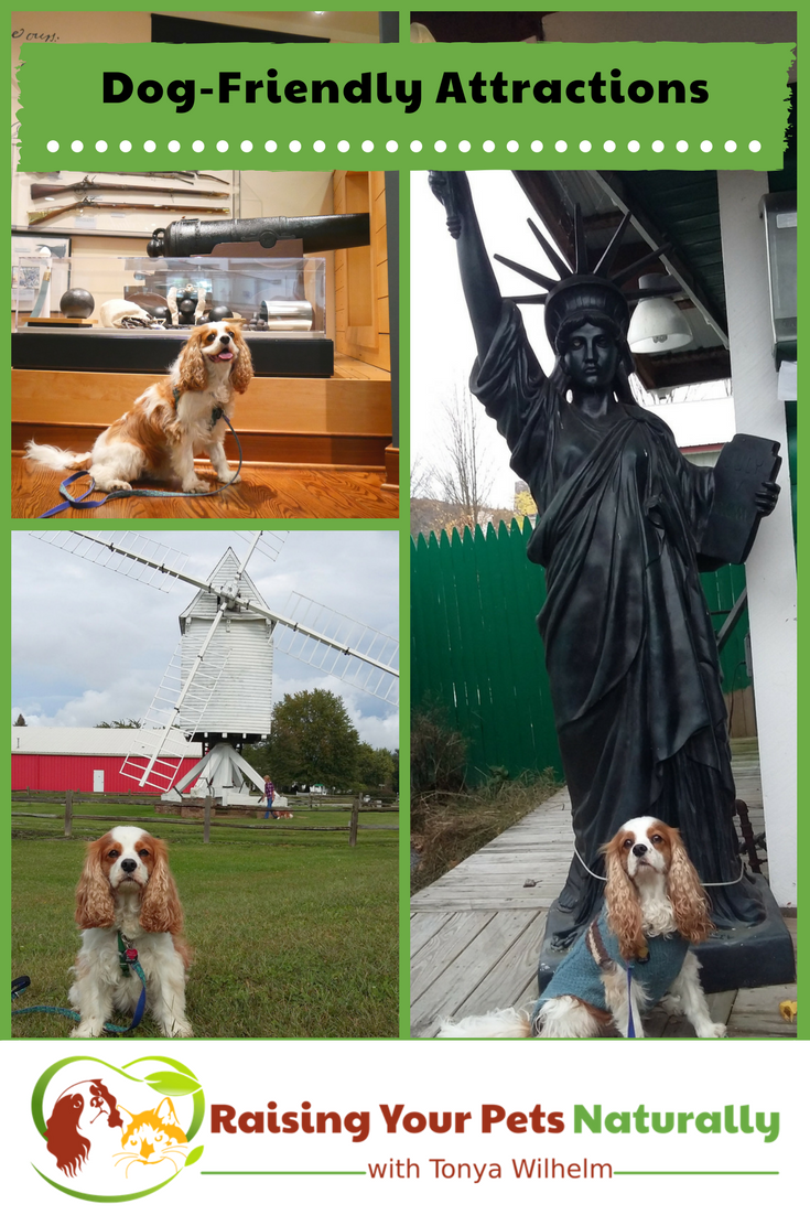If you are looking for a dog-friendly vacation or dog-friendly day trip, check out some of these great dog-friendly attractions! #raisingyourpetsnaturally #dogfriendly #travelingwithdogs #dogfriendlyvacations #travelingwithpets