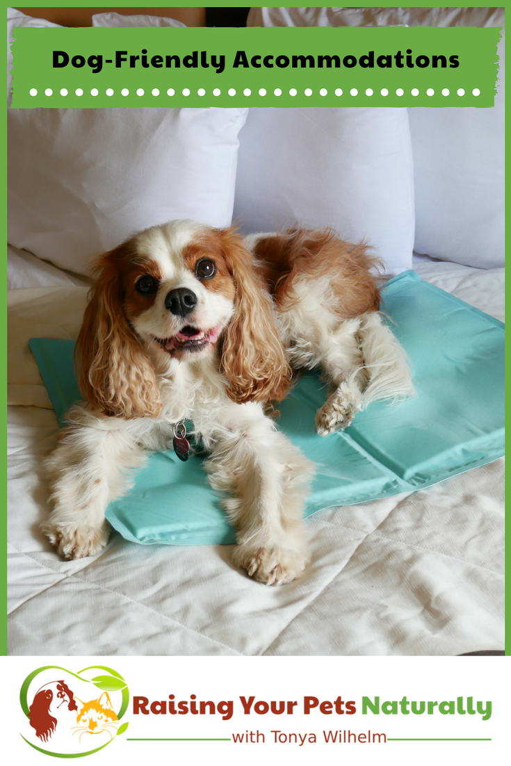 Dog-friendly hotels, cabins, rental homes and resorts. If you are traveling with dogs, you won't want to miss these pet-friendly accommodations. #raisingyourpetsnaturally #dogfriendly #petfriendly #dogfriendlyhotels #dogfriendlycabins