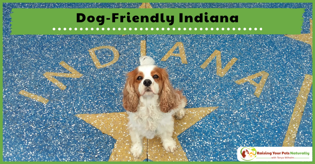Dog-Friendly Vacations in The Midwest-Dog-Friendly Indiana. If you are traveling with dogs, you won't want to miss these Dog-Friendly Indiana Attractions. #raisingyourpetsnaturally