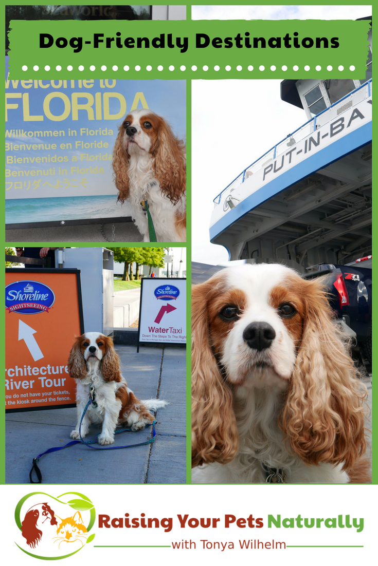 If you are looking for a dog-friendly vacation or dog-friendly day trip, check out some of these great dog-friendly vacations! #raisingyourpetsnaturally #dogfriendly #travelingwithdogs #dogfriendlyvacations #travelingwithpets