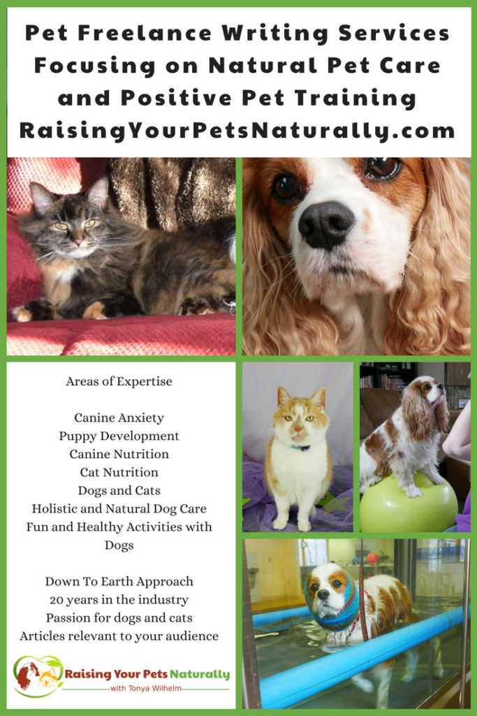 Freelance and ghost writers in the natural pet industry. Tonya Wilhelm is a natural and holistic pet care expert, pet freelance writer, and positive dog and cat behavior specialist and trainer. #raisingyourpetsnaturally #freelancewriters #petfreelance #petwriters #dogwriters #catwriters