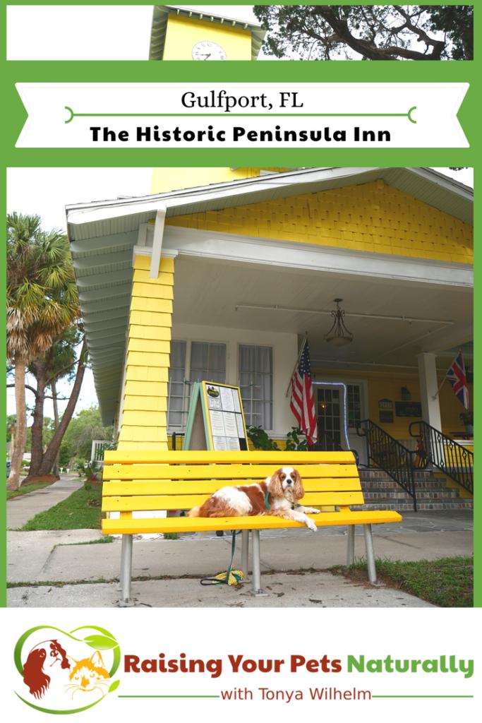 Dog-Friendly Florida Beach Vacations. The Historic Peninsula Inn, Gulfport, Florida Review. #raisingyourpetsnaturally #petfriendly #petfriendlyvacationrentals #gulfport #florida #gulfportflorida #dogfriendlyflorida