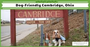 Dog travel guides