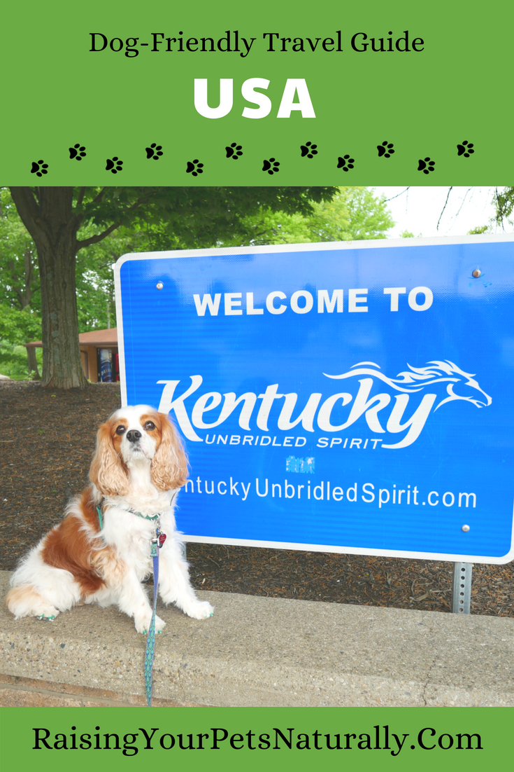 Dog-Friendly Travel Guide for a Dog Road Trip. Dog-friendly travel guides are a great way to plan your next pet-friendly vacation. #raisingyourpetsnaturally #travelguide #travelguides ##petfriendly #dogfriendly #petfriendlyvacations #dogfriendlyvacations