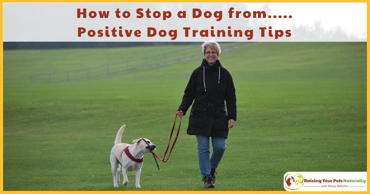 But he still doesn't—or, he still does—(fill in the blank). Learn why your dog training efforts are not successful. #raisingyourpetsnaturally