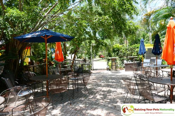 Dog-Friendly Florida Beach Vacations. The Historic Peninsula Inn, Gulfport, Florida Review. #raisingyourpetsnaturally
