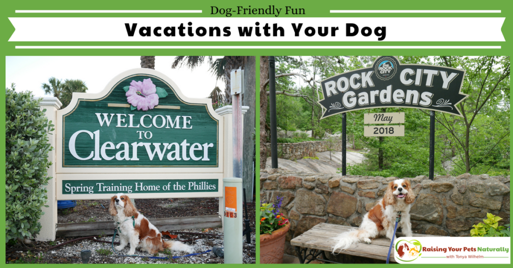 Dog-friendly vacations and traveling with dogs blog. Pet-friendly vacation rentals, travel safety tips, and so much more. #raisingyourpetsnaturally