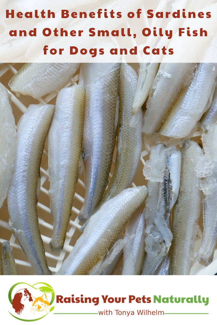 Can dogs and cats eat fish? Learn the health benefits of sardines and other small fish for pets. #raisingyourpetsnaturally #sardines #realfoodfordogs #realfoodforpets #supplementsfordogs #dogarthritis #rawfeddogs #rawfedpets #rawpetfood